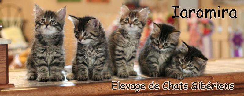bandeau_chatons3.jpg