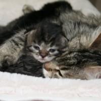 Ophelia et ses chatons 2sem (3) [800x600]
