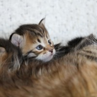 Camilla chatons 3sem (2)