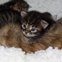 Camilla chatons 3sem (3)