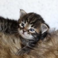 Camilla chatons 3sem (4)