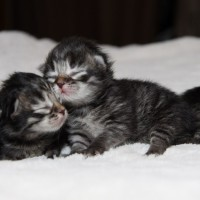 Chatons 5jours (5)