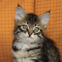 Boy Camilla 2mois (7)