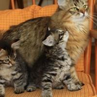 chatons Camilla 2mois (5)