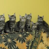 chatons Ophelia 12,5weeks (5)