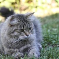 Ophelia 16oct11 2 ans et demi (2)