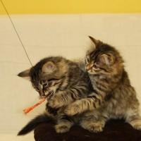 Gabyllou et Gavrick 1er Nov 2011 (10)