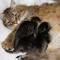 Chatons Hebe 4jours (4)