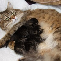Chatons Hebe 4jours (5)