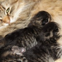 Chatons Hebe 4jours (6)