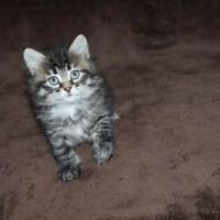 Portée Ophelia 1 mois (12)