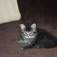 Portée Ophelia 1 mois (7)