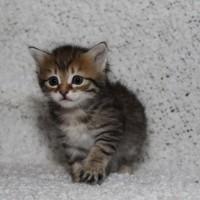 Femelle spotted 1mois (16)