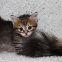 Femelle spotted 1mois (8)