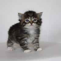 Boy Camilla Milo 1 mois (5)