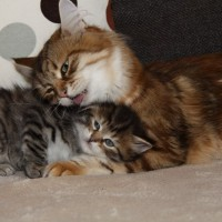 Petit matou et sa maman 6 semaines (6)