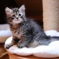 girl-bleue-ioma-presque-2-mois-4