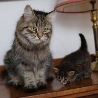 Maman Lou et Oksana